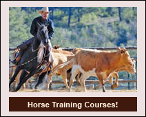 2011 courses now available!
